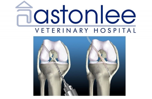 Canine Cruciate Surgery: Natural Graft Technique - Astonlee Vet Hospital